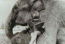 Elephants / by Kristen Fogarty