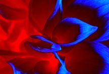 : poetic↑Tomâle : / Bibbity Bobbity Boos of Everything Electric Blue & Red Combo.