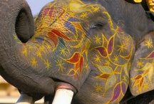 How to Paint an Elephant?