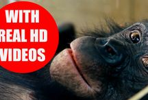 Educational Videos for Kids / You can find high-quality videos about animals, animal sounds and other objects on our channel. Our educational videos are intended to teach your children objects, animals and animal sounds. Principally, we are not using pictures, animations or cartoons for our content! Real videos in HD quality will help your kids to learn the animals and objects quickly and enthusiastically.