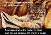 Catology of books / Cats and books
