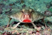 παράξενα ζώα θαλάσσης