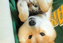 animals ^-^