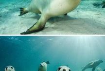 phoques; dauphins