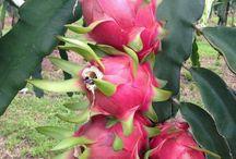 plantas de fruto