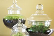 Terrariums / by Mary Godwin