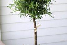 topiary- műkertészet