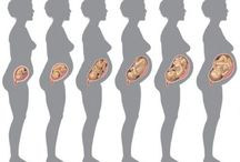 Development of Fetus