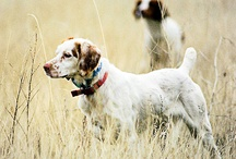 Bird Hunting Dogs / Pointers, flushers, setters or just must.... the best dogs are the ones that find birds.