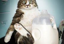 Aliments toxiques - Animaux / Vous devez impérativement éviter de donner ces aliments à votre chien et à votre chat. #cat #dog #food