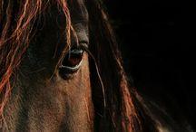 Horses / A Beautiful Animal