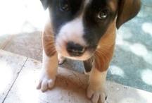 @ Cute Animals @