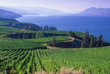 Wine Regions of the World