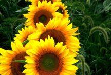 Matahari / all-about-sunny / by Maria Ina