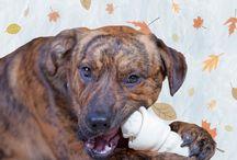 Dangerous Dog Treats