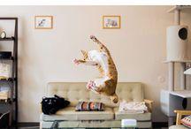 Latające koty