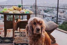My love, Cappadocia / #Travel #Turkey #Nevsehir #Goreme #Kapadokya #Cappadocia #Hotel #BucketList