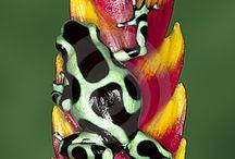 Nature.Amphibians / by Daniel Walsh