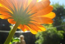 Garden Love / by Taryn Wilson