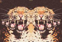 COLLAGE / El Collage (del francès, coller: enganxar) és una tècnica pictòrica consistent en la realització d'una pintura o dibuix amb un o més objectes enganxats. Un collage es pot compondre per complet o solament en part de fotografies, fusta, pell, diaris, revistes, objectes d'ús quotidià, etc. Quan l'objecte resultant se separa de la paret, parlem d'assemblage. / by J U L A T S