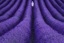 Photo.Purple
