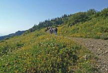 Day Hikes Near Portland, OR