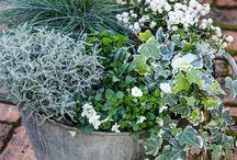 Autumn winter plants