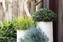 Jardins/ Vasos / Só maravilhas!..