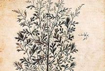 1 ботаническая иллюстрация чб