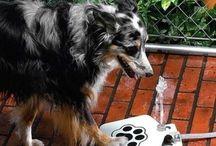 Doggie stuff / by Kelly Sorenson