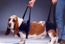 Tragehilfen für Hunde / Tragehilfen und Tragegurte für Hunde kommen vor allem dann zum Einsatz, wenn Sie Ihrem Hund aufgrund einer Verletzung, Operation oder einer Behinderung mehr und stabilere Mobilität ermöglichen wollen.