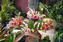 Que orquídea linda
