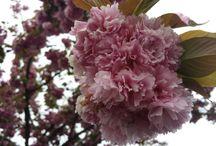 Flowers / Foto fiori