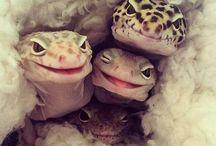 Cute Reptiles