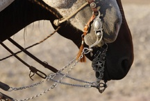 horses/mules / by alexia riley