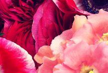 Pretty Images / by Danielle Zens