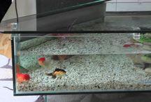 For hustle free #aquarium rental services in #London,