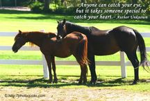 horse quotes...