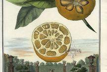 Historical garden prints