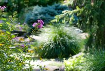Gardens / Lush gardens and anything and everything pertaining to landscaping.