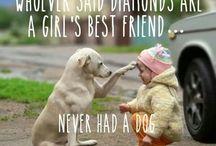 Pet Wisdom