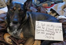 Dog Shaming / Bad, bad dogs... / by Joan Halbig