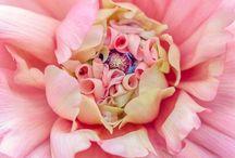 Closeup Flowers