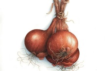 Картинки овощи