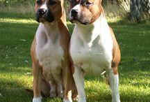 Miglior amico dell'uomo / Cani