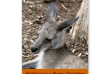 Australian Wildlife Calendars and Xmas Cards created with ZAZZLE / Here you will find a range of Xmas and New Year cards and Calendars featuring photos of various Australian wildlife that can be found on the Gold Coast in Queensland, Australia.  Click on photo to view item then click on item to see how to purchase that item.