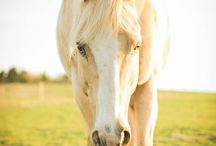 Konie☆
