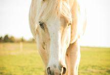 Horses☆