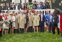 Orb - 2013 Kentucky Derby Winner / by Horse Racing Nation