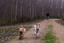 Kika y Pepo. Mis compañeros. / Fotos de mis perritos.
